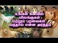உங்கள் கனவில் விலங்குகள் மற்றும் பறவைகள் வந்தால் என்ன அர்த்தம் | Tamil