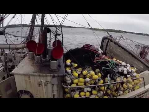 Herring Roe Processing Yarmouth Nova Scotia