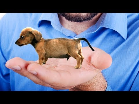 the smallest dog in the world - 480×360