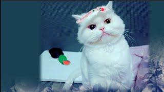 [까까캔디] 오니기리송 패러디하기 |까까냥이 이마에 붙은 스티커 떼기 | 웃기는 고양이
