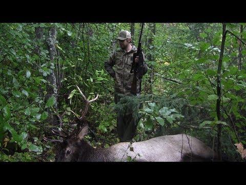 Outlaw Outdoors Alberta Rifle Elk Hunt Alberta Bull Elk Rifle Hunt