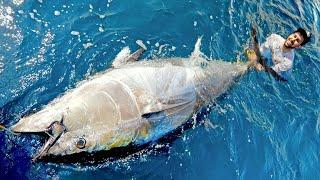 This Tuna was MASSIVE!!