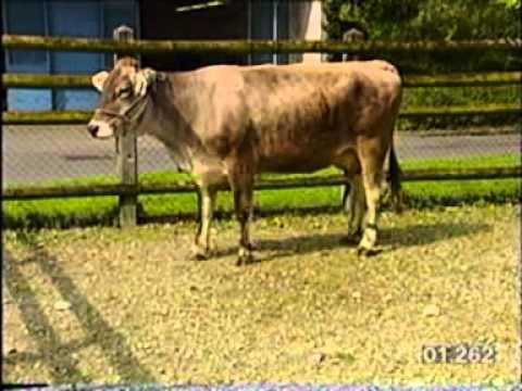 bovine-spongiform-encephalopathy