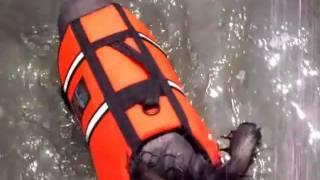 湖で水泳に挑戦したチャイニーズクレステッドドッグのほてい君とえびす君.