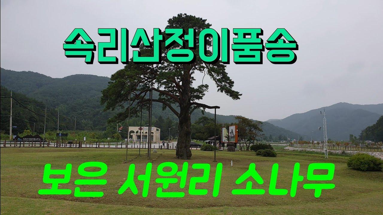 정이품송.연꽃단지.보은 서원리 소나무.충북 보은 관광.힐링여행.묻지마관광