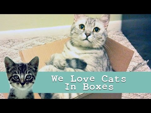 'Cats in Boxes' : Funny Cat Video