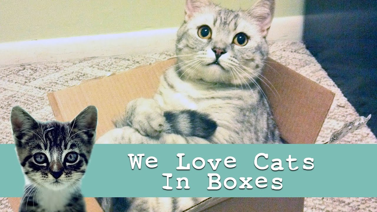 cats in boxes funny cat video youtube. Black Bedroom Furniture Sets. Home Design Ideas