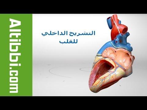 Altibbi.com – تشريح قلب الانسان من الداخل