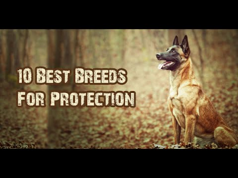 Top 10 Dog Breeds For Protection