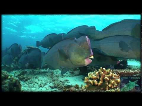 Scuba diving in Sipadan, Sabah, Borneo, Malaysia (Celebes Sea) hd 2012 (Part II)