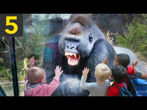 Top 5 Angry Monkey Encounters