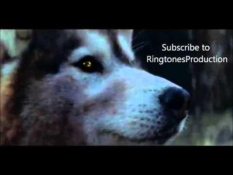Ringtone/Klingelton - David Guetta ft. Sia - She Wolf + Download