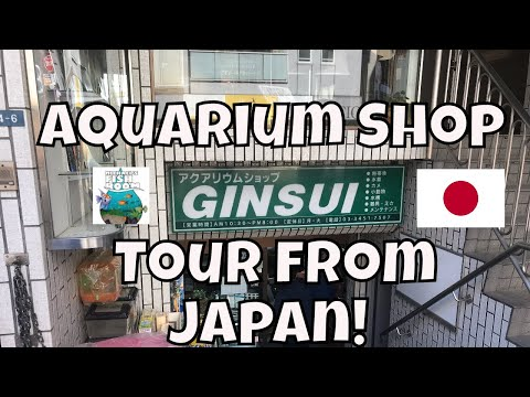 Japanese Fish Store Tour Ginsui Japanese Aquarium Store Tour