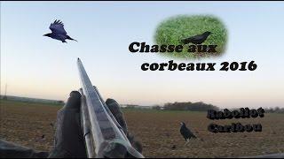 Compilation de tir aux corbeaux