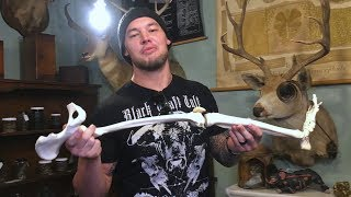 You won't believe Baron Corbin's obsession with bizarre oddities