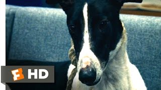 The Honeymooners (8/10) Movie Clip - Dog Training (2005) Hd