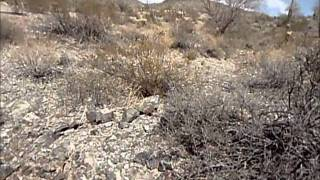New Propects for Arizona Gold.wmv