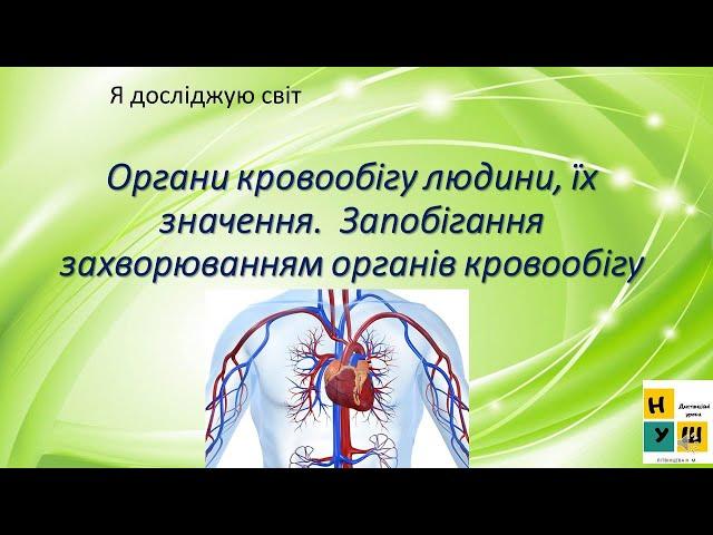 3 клас. Я досліджую світ. Органи кровообігу їх значення. Запобігання захворюванням органів  кровообігу.