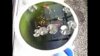 金魚鉢のメダカ thumbnail