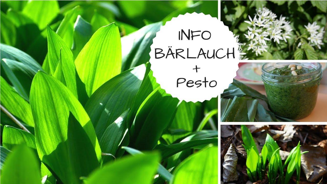Bärlauch im Auenwald + Rezept für Bärlauch Pesto roh-vegan