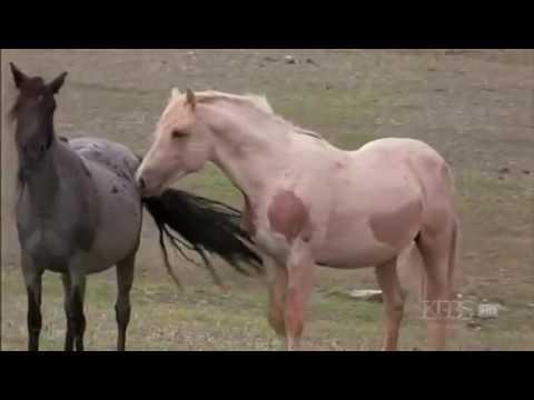 Cloud's Legacy, The Wild Stallion Returns