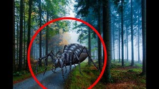 5 REAL GIANT SPIDERS CAUGHT ON CAMERA & SPOTTED IN REAL LIFE! 3