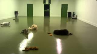 Dog Daycare Las Vegas | Pet Boarding | Hydrant Club