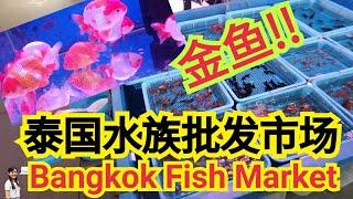 Bangkok Fish Market 曼谷鱼市场 泰国批发水族市场 Thailand BangkokAquarium Fish Market