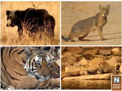 WEBINAR | Nature & Culture: India's Wild Side