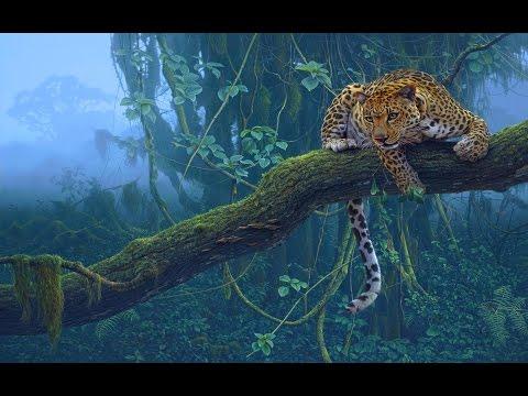 Thực hành: Xem phim về một số tập tính ở động vật