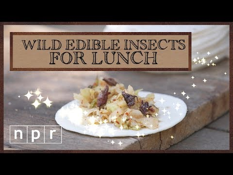 Wild Edible Insects For Lunch | Foraging | NPR