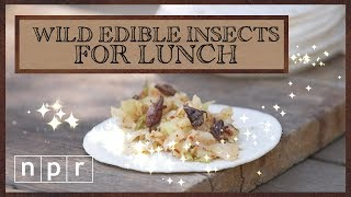 Four Fancy Meals You Can Make With Bugs | Foraging | NPR