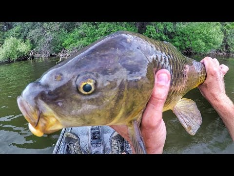 Fishing Topwater Lures For...Carp?