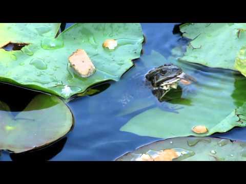 Что едят жабы и лягушки в домашних условиях