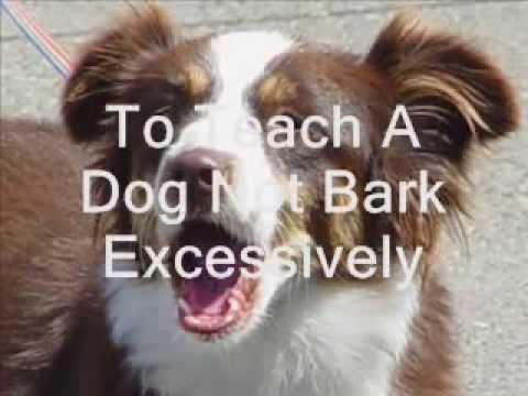 teach-a-dog-not-to-bark