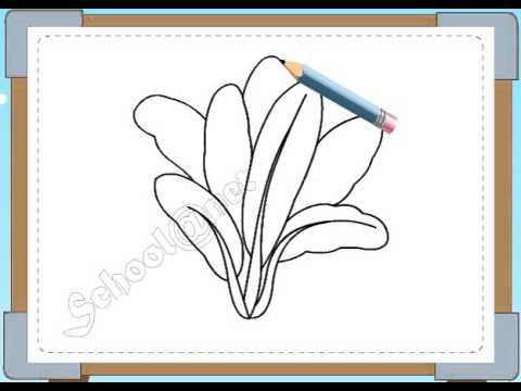 BÉ HỌA SĨ - Thực hành tập vẽ 144: Vẽ rau cải chíp