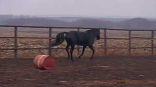 Игры животных: ЛОШАДИ - Сармат Game animals: horses - Sarmatian