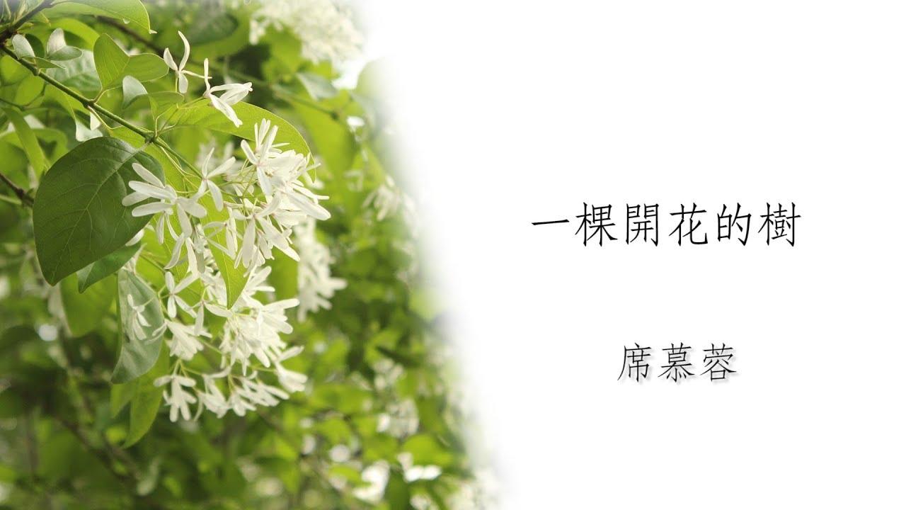 【一介朗讀】一棵開花的樹-席慕蓉 - YouTube