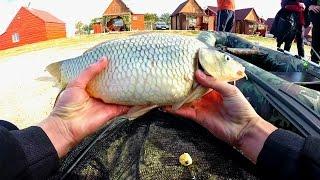 Ловля карпа осенью на донку.Рыбалка.Fishing(Видео о ловле карпа осенью на донную снасть с использованием мастырки в прикормке и гороха на крючке. Пабли..., 2015-10-28T16:27:08.000Z)