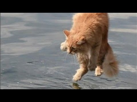 Cats hate water new compilation.