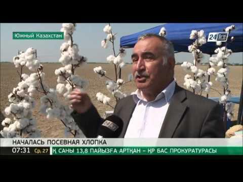 В Южном Казахстане дехкане начали посевную хлопка