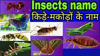 कीड़े- मकोड़े के नाम  || kit patango ke naam for kids leaning | all insects name CBSE ciass  1