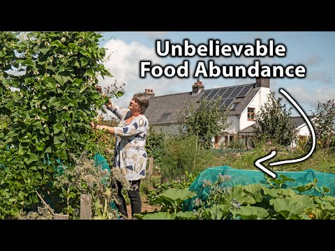 Living the Self-Sufficiency Dream on a Tiny Homestead | Organic & Permaculture Abundance