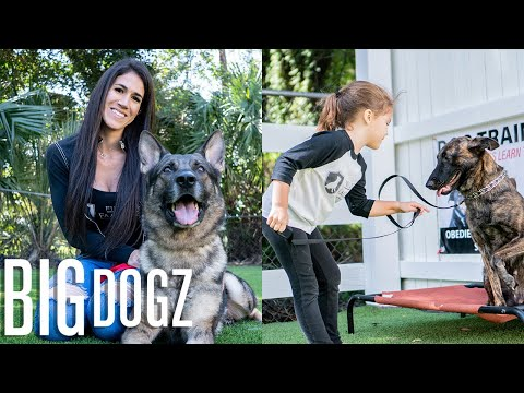 Training $70K Attack Dogs... With Our 4 Year-Old | BIG DOGZ