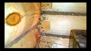 Плесень в бане! Не давайте бане гнить! Откуда берется грибок(На видео показано как плесень и грибок появились в бане. Также рассказано откуда оно все взялось и как его..., 2015-05-25T14:09:30.000Z)