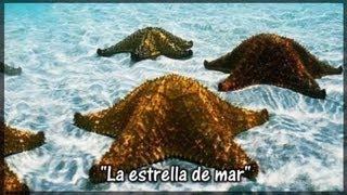 la estrella de mar cuentos espirituales