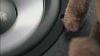 Stuffed Animals Plus One Bass System