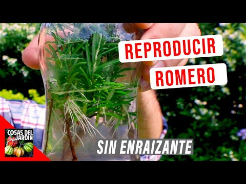 Cómo reproducir Romero - 3 Fáciles métodos - 1