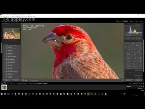 Lightroom Editing Series - Basic Wildlife Raw File Processing