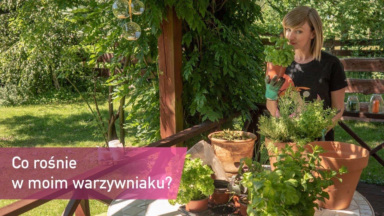 Mój ogródek warzywny – co w nim rośnie?   Ula Pedantula #139